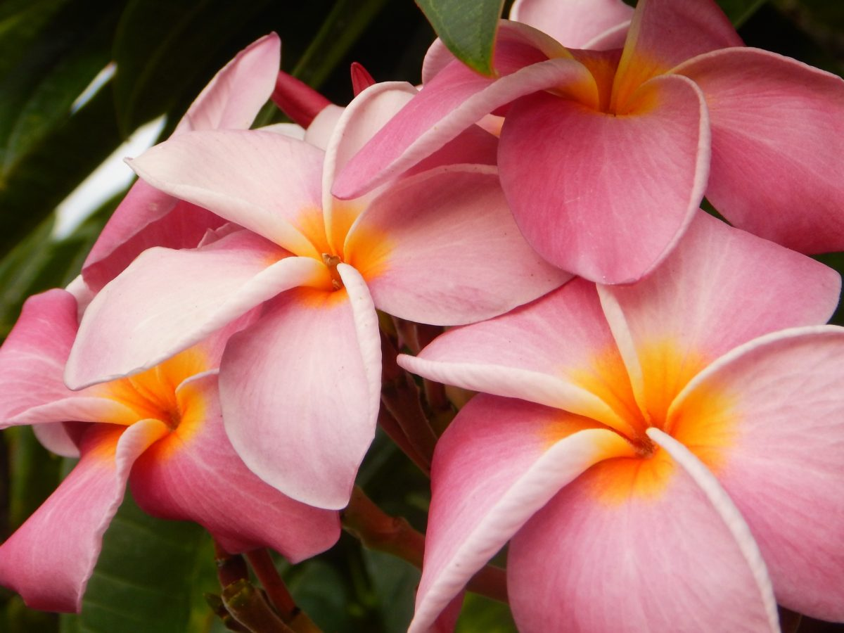 Gorgeous Hawaiian flowers